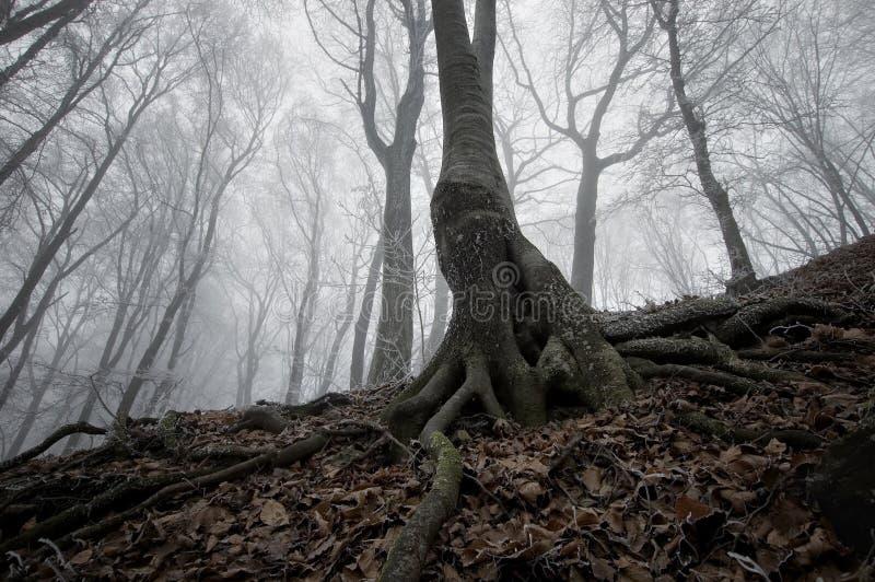 Donkere boom in een bevroren bos stock foto
