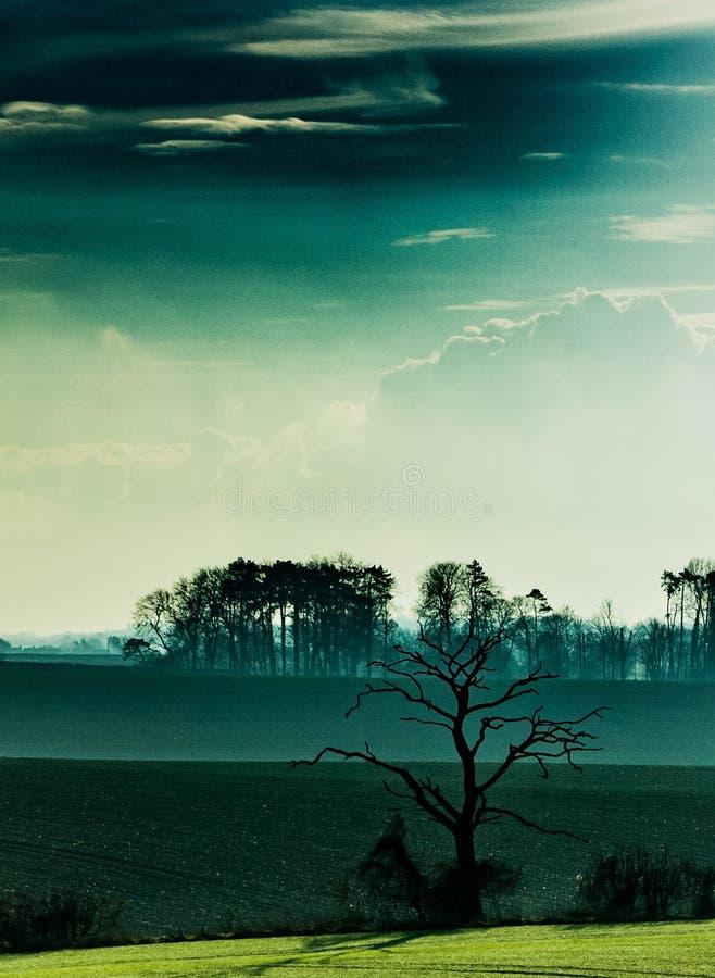 Donkere Boom en wolken stock afbeeldingen