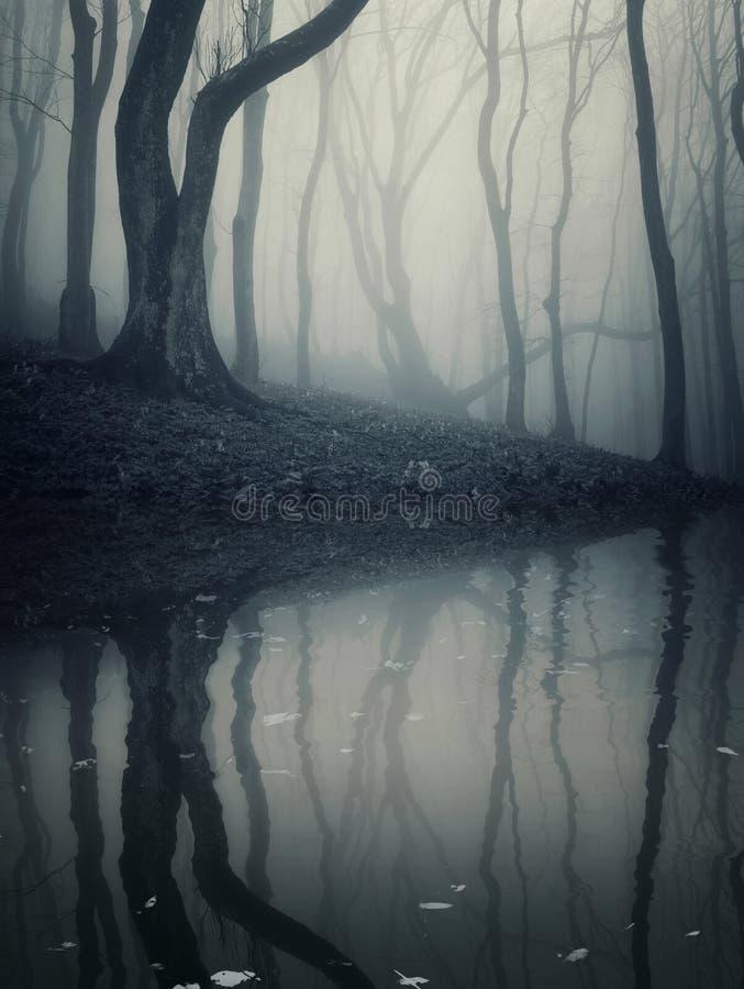 Donkere bosscène met angstaanjagend meer en gevallen bladeren stock foto