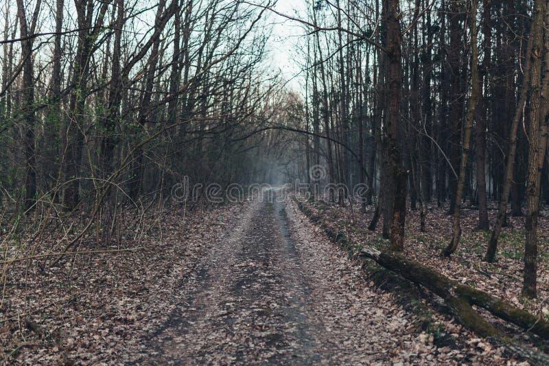 Donkere enge bosweg bij achtergrond van nacht surreal Halloween royalty-vrije stock afbeeldingen