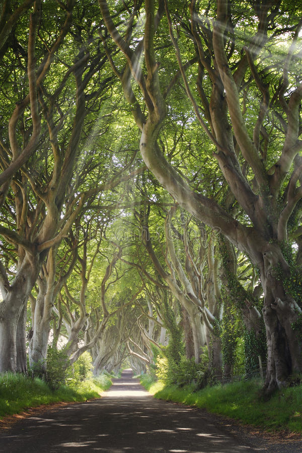 Donkere Hagen met zonstralen royalty-vrije stock afbeeldingen