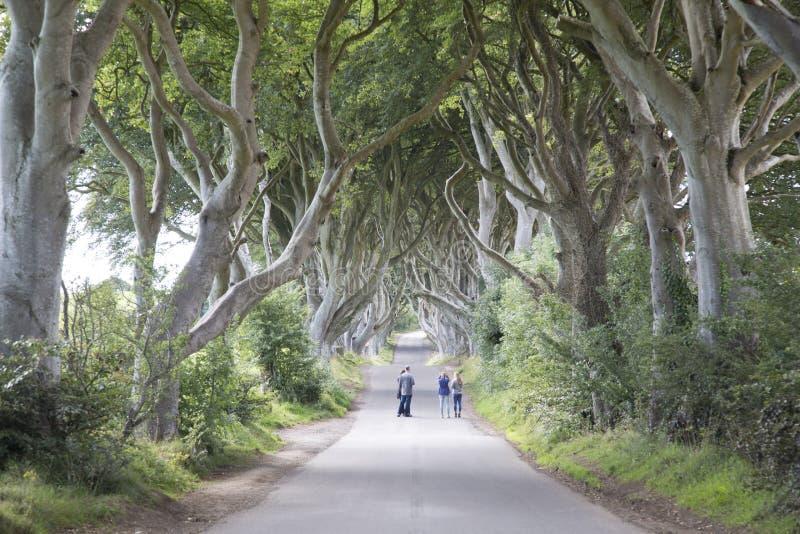 Donkere Hagen, Provincie Antrim, Noord-Ierland stock foto