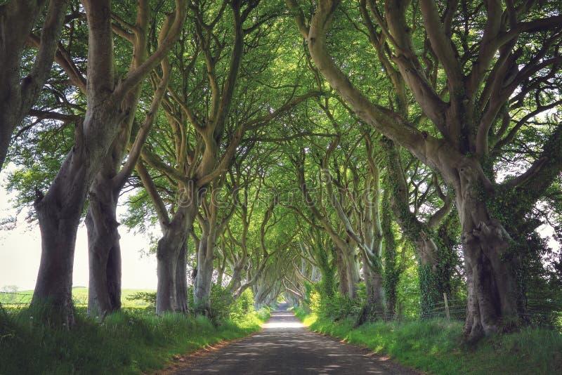 Donkere Hagenbomen royalty-vrije stock afbeeldingen