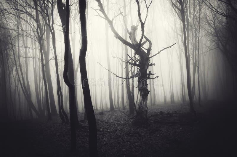 Donkere Halloween-scène van achtervolgd bos met mist stock fotografie