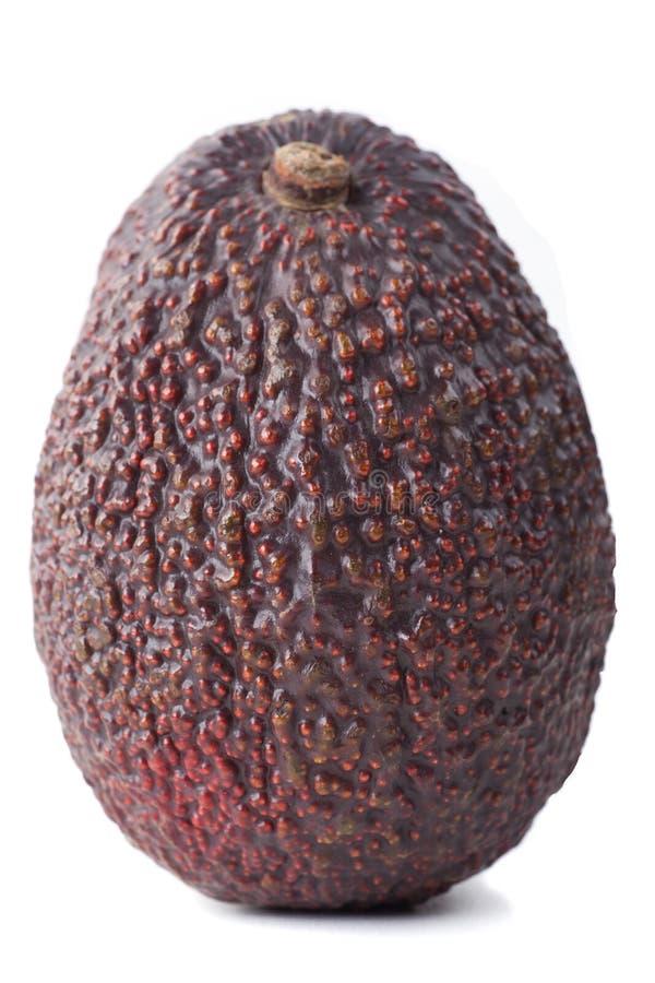 Donkere hass-Avocado royalty-vrije stock foto's