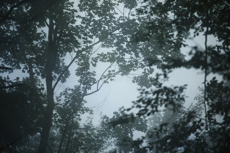 Donkere mistige bosachtergrond royalty-vrije stock foto