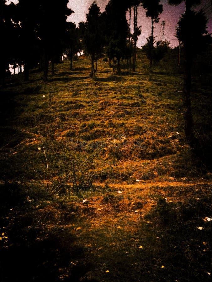 Donkere nachtscène in een bos royalty-vrije stock afbeeldingen