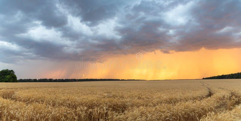 Donkere onweerswolken over een tarwegebied bij zonsondergang Het begin van een orkaan in de staat van Texas royalty-vrije stock afbeelding
