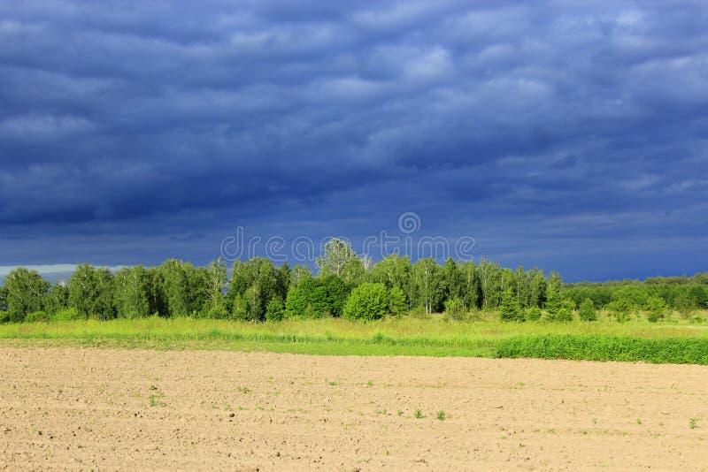 Donkere onweerswolkwolken onder het bos en het land stock fotografie