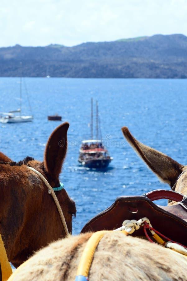 Donkere paardoren, traditioneel vervoer op het Eiland Santorini royalty-vrije stock foto's