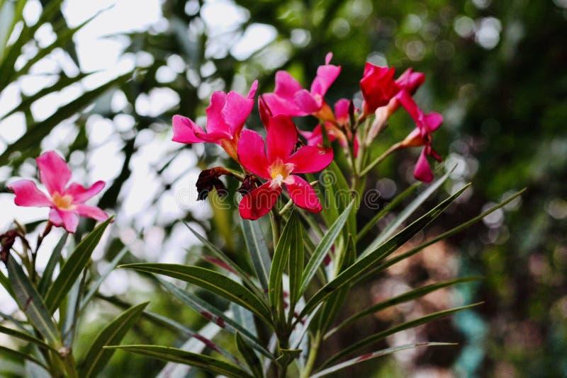 Donkere Roze bloemen in de vallei stock afbeeldingen