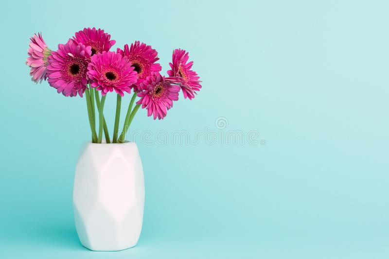 Donkere roze gerberas in een vaas op de Blauwe Gekleurde Achtergrond van het Pastelkleursuikergoed royalty-vrije stock foto's