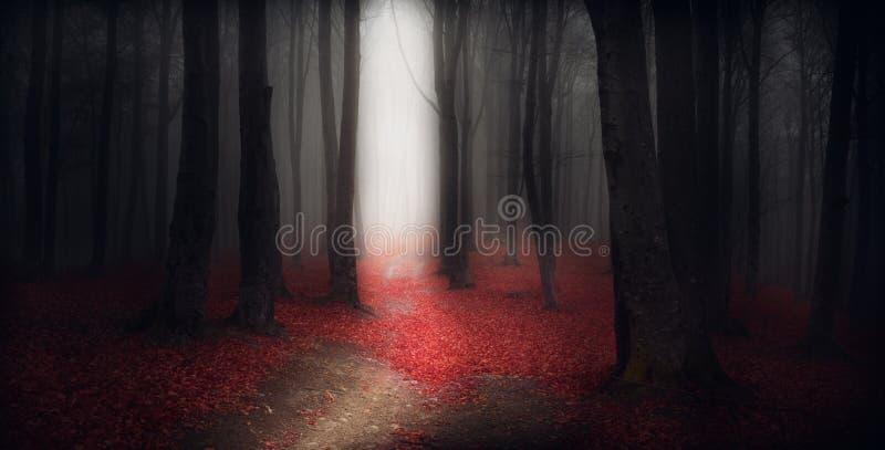 Donkere sleeptrog een de herfstbos met mist stock afbeelding