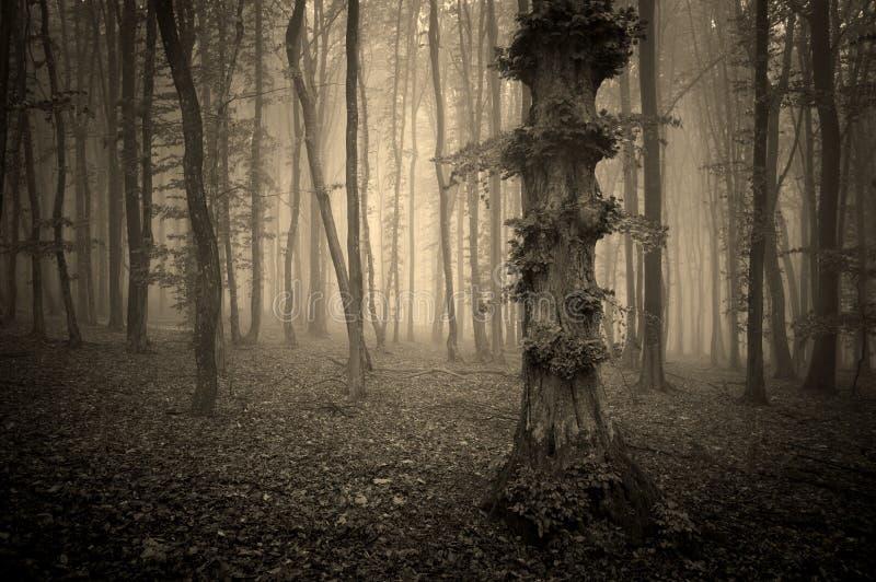 Donkere uitstekende foto van een bos met mist en vreemde boom royalty-vrije stock foto