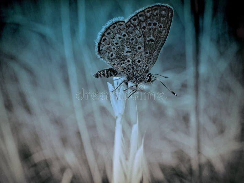 Donkere vlinder stock fotografie