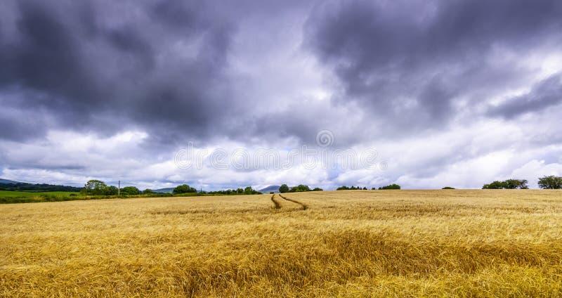 Donkere wolken over een tarwegebied in Ierland stock fotografie