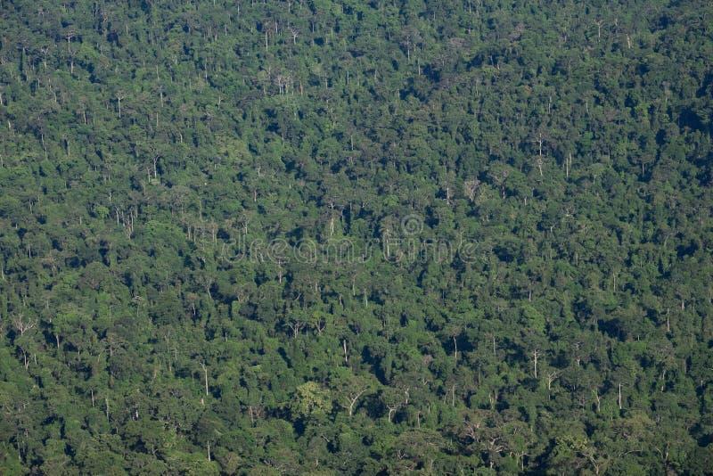 Donkergroene bos de textuurachtergrond van de Wildernisboom stock afbeelding