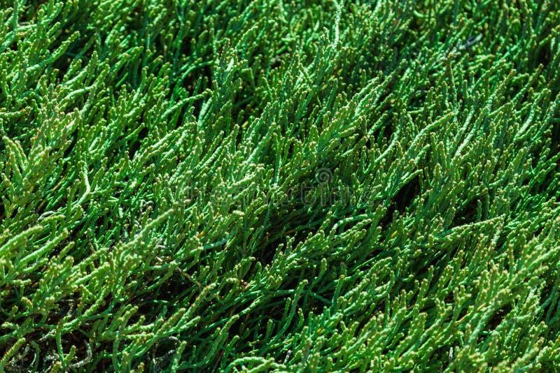 Donkergroene natuurlijke achtergrond stock afbeeldingen