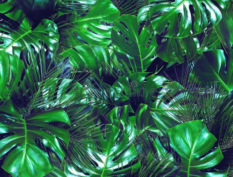 Donkergroene tropische bladerenachtergrond stock foto's
