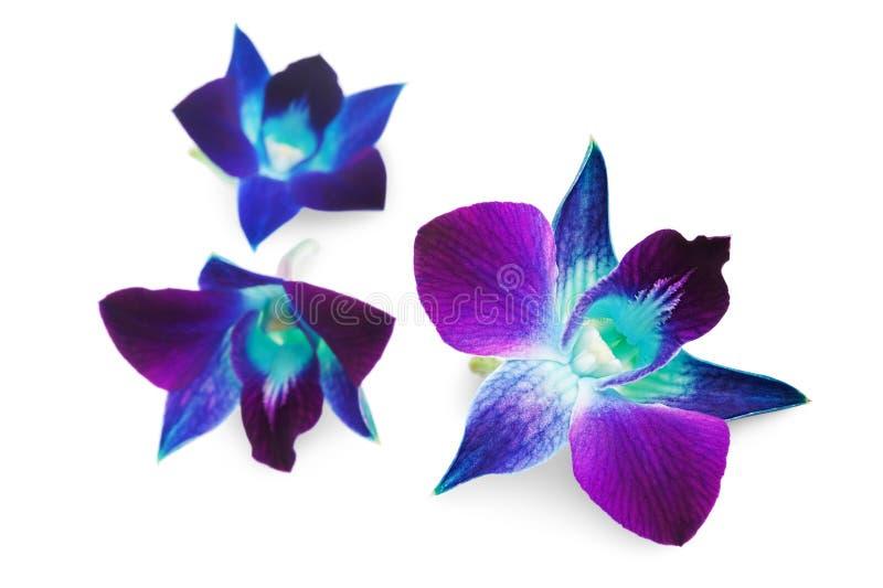 Donkerpaarse orchidee royalty-vrije stock afbeeldingen
