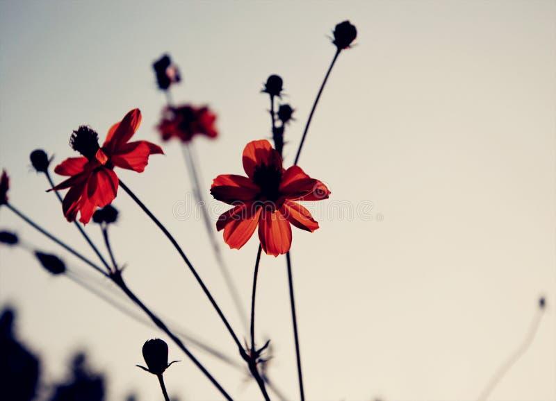 Donkerrode bloemen royalty-vrije stock afbeeldingen