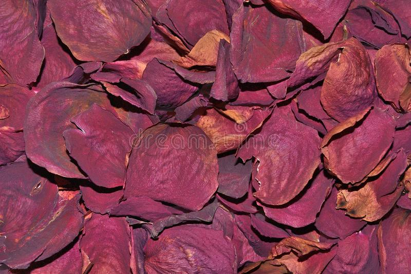 Donkerrode Rose Petals Dried For Bath, Thee, Huid, Olieinfusie stock foto