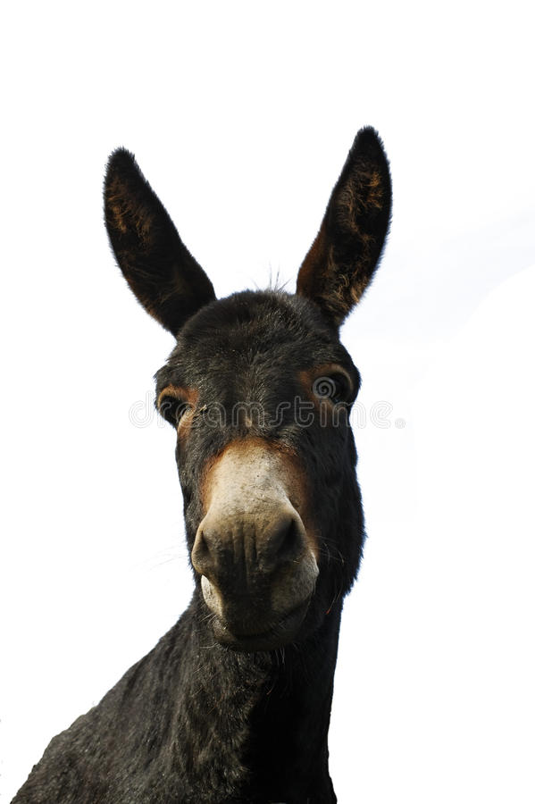 Donkey 1 Stock Photography