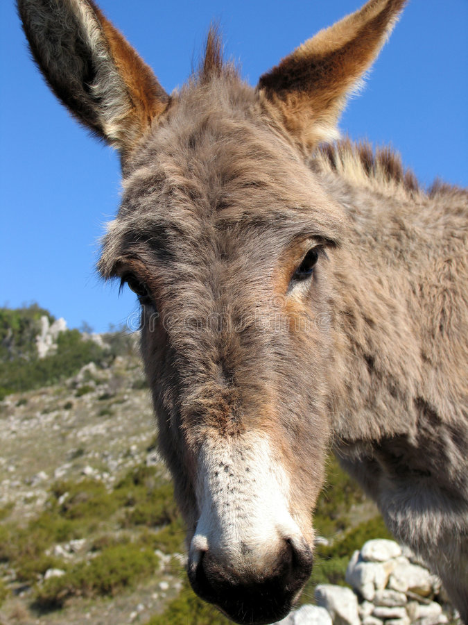 Download Donkey stock image. Image of animal, farm, country, eating - 189377