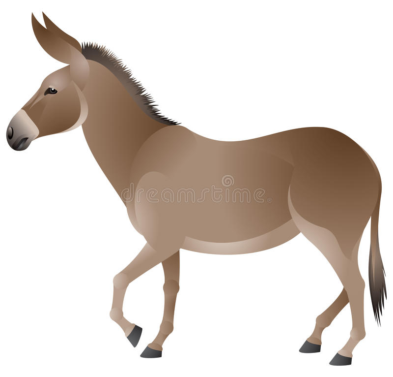 Download Donkey stock vector. Image of farm, vector, domestic - 23651862