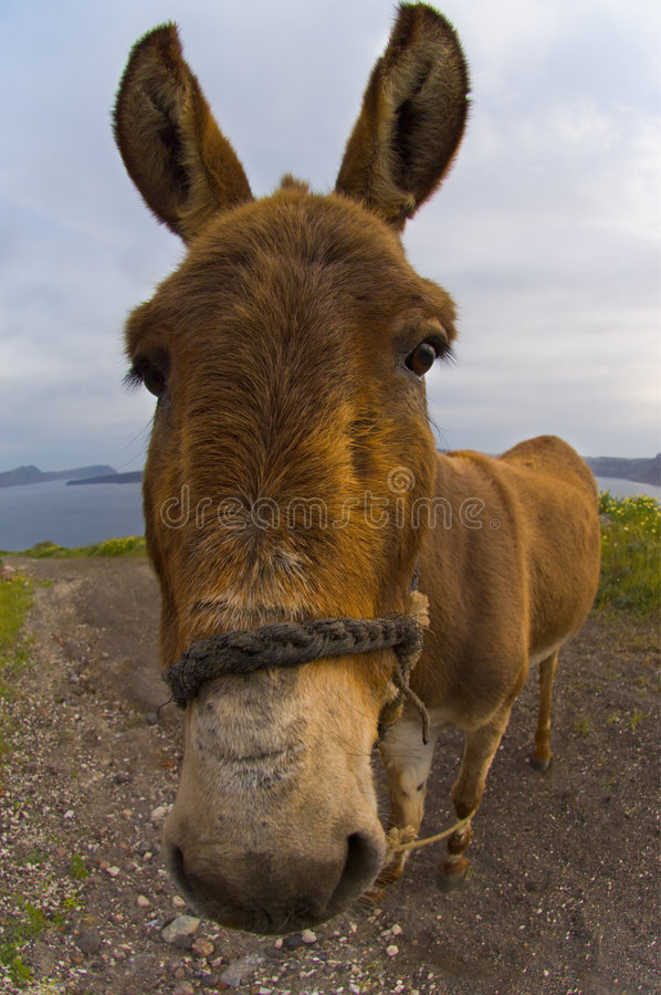 Download Donkey stock image. Image of apathy, impression, ears - 2522199