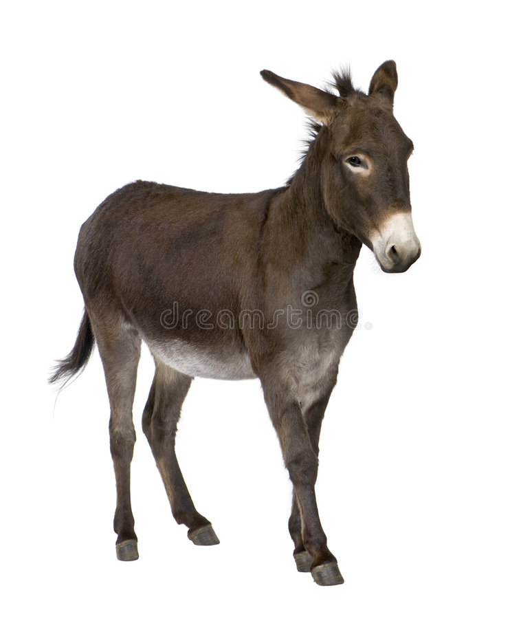 Donkey ( 4 years) royalty free stock photos
