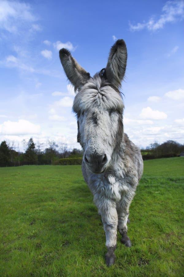 Free Donkey Stock Image - 5358041