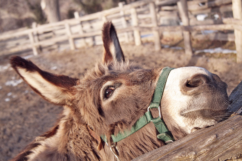 Download Donkey stock photo. Image of large, friend, beauty, brown - 7375538