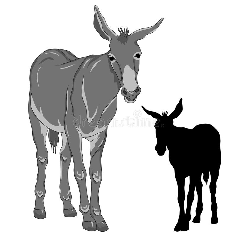 Donkey black silhouette. Realistic gray stock illustration