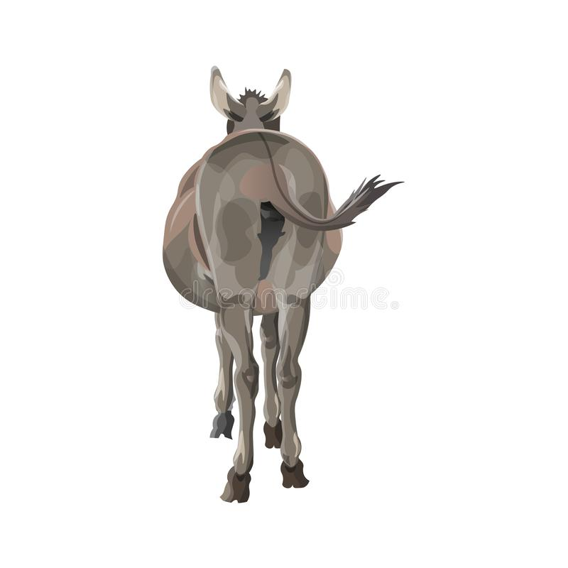 Donkey vector. The donkey wags its tail. Back view. Vector illustration isolated on white background stock illustration