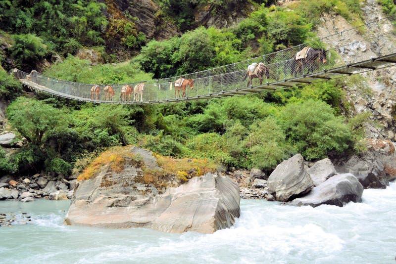 Donkey caravan on the bridge, Nepal stock photos