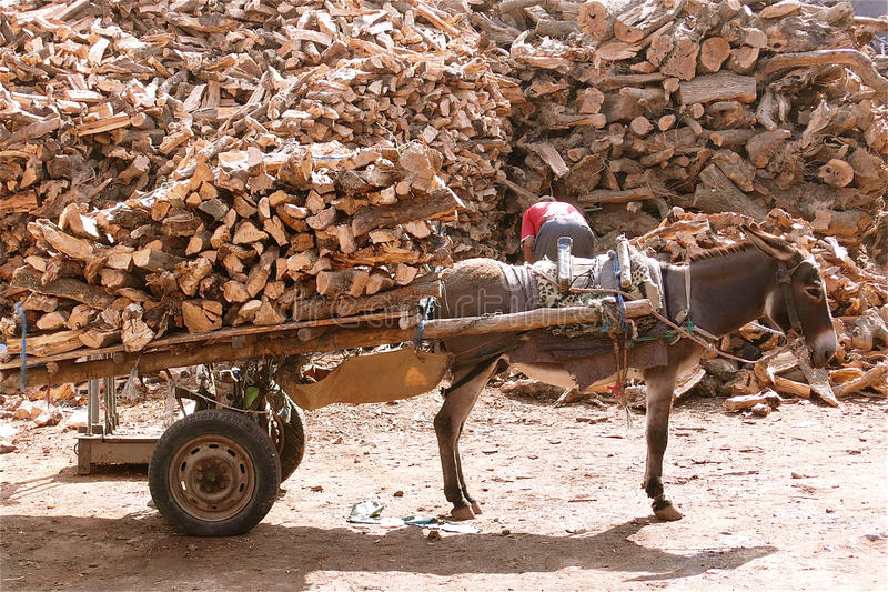 Donkey carriage. Donkey with a carriage full of wooden chunks stock images