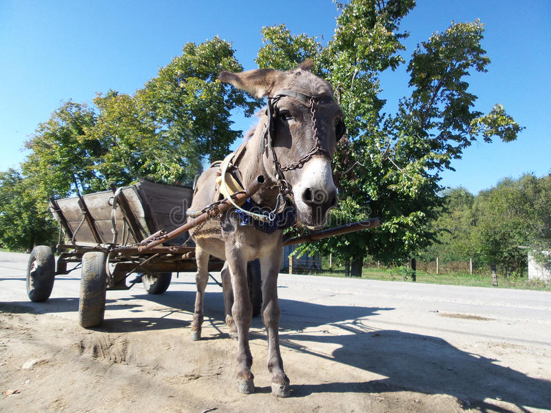 Donkey and cart. A donkey hitched to a cart, with blue sky in background in a sunny day stock image