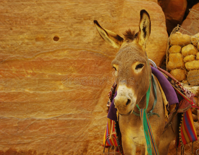 Donkey in the caves. Donkey in Jordan Petra caves stock images