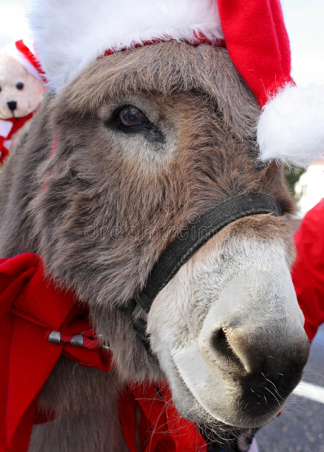 Donkey With Christmas Hat stock photos