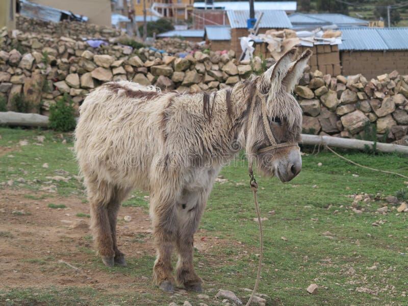 Download Donkey stock photo. Image of animal, cloud, copacabana - 39509594