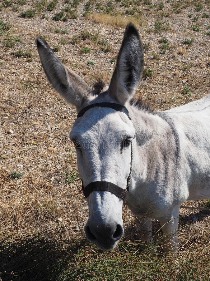 Donkey in the countryside royalty free stock images