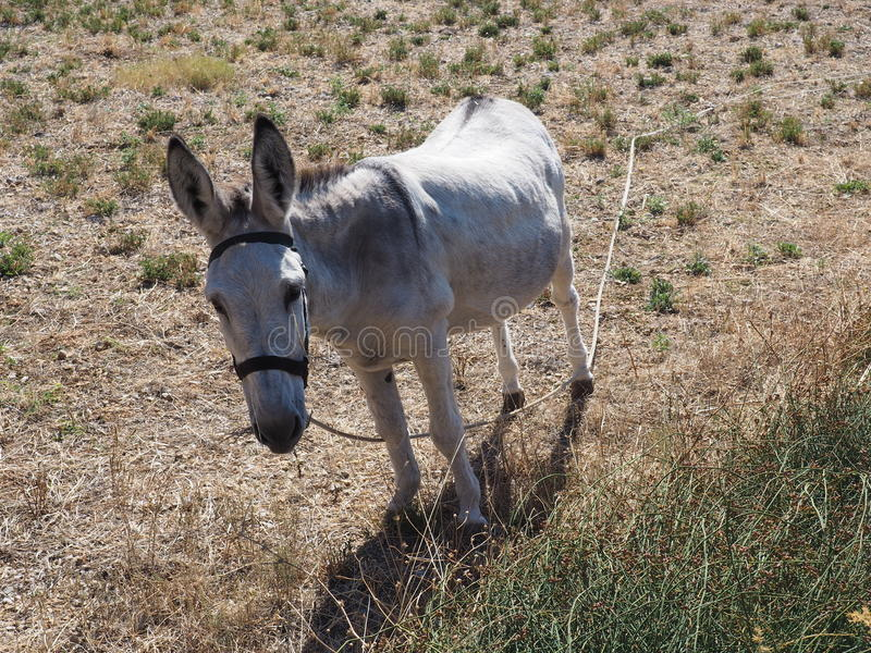 Donkey in the countryside royalty free stock photo