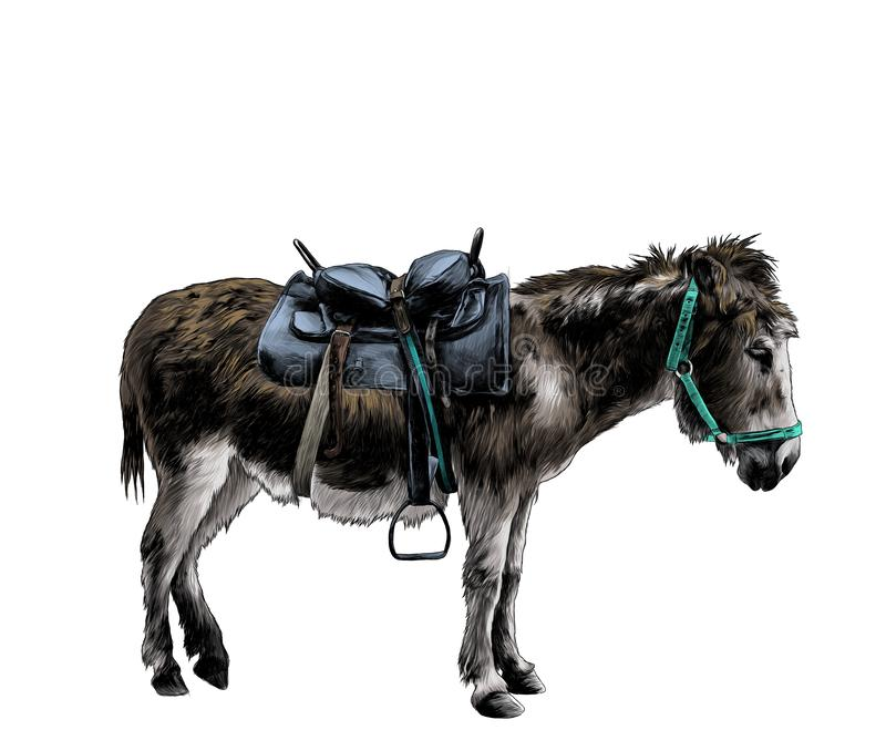 Donkey dressed in outfit stands sideways in full-length profile. Sketch vector graphic color illustration on white background royalty free illustration