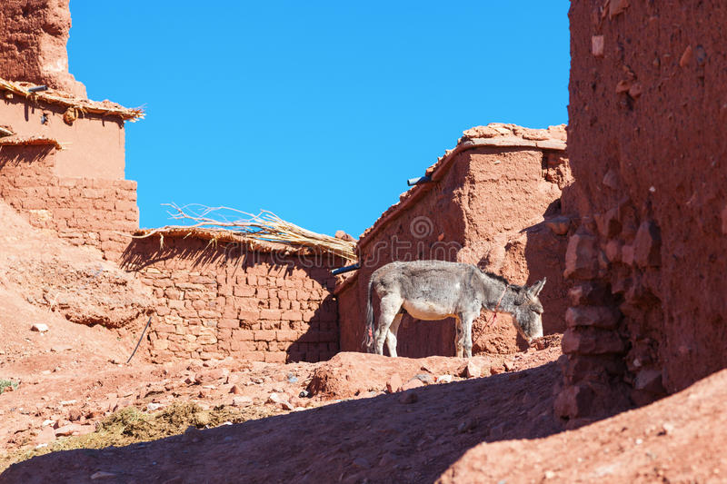 Download Donkey Eating In A Settlement Stock Image - Image: 26342703