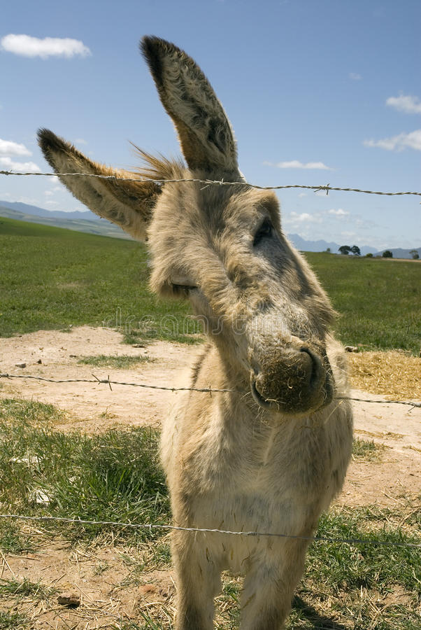 Donkey and fence royalty free stock photography