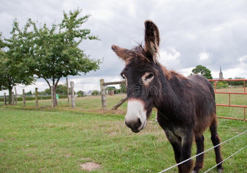Donkey In A Field Royalty Free Stock Photos
