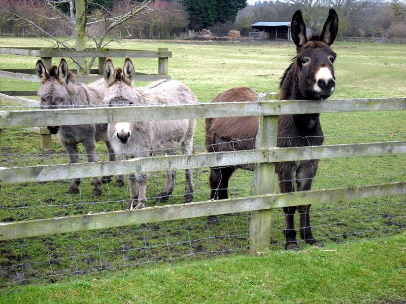 Donkey Friends stock photos