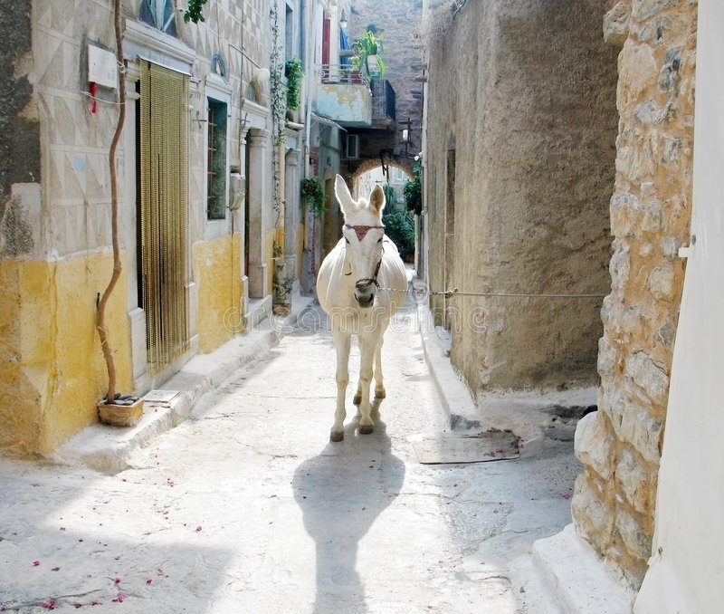 Download Donkey in Greek Village stock photo. Image of rural, cobblestones - 3375068