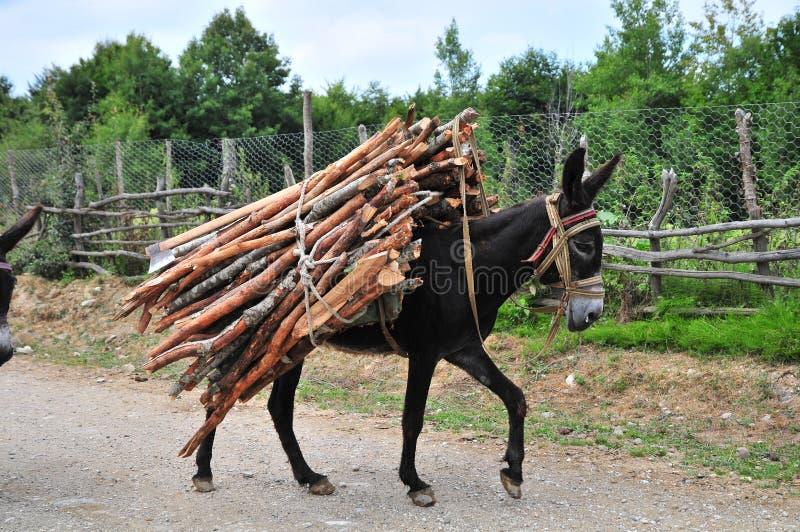 Donkey Heavy Loaded royalty free stock image